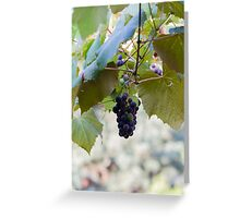 grape and vineyard in spring Greeting Card