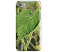 Leaf at First Sight iPhone Case/Skin