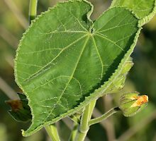 Leaf at First Sight by Ben Waggoner