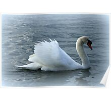 swan on the lake Poster