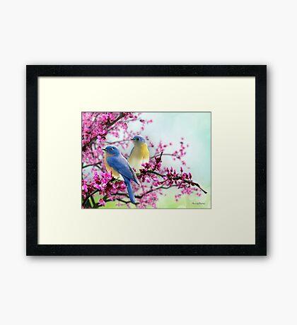 Sweet Bluebirds Framed Print