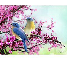 Sweet Bluebirds Photographic Print
