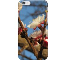 Apricot blossoms iPhone Case/Skin