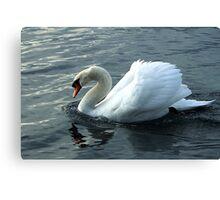 swan on the lake Canvas Print