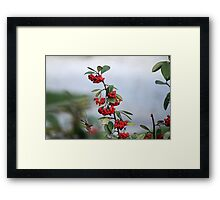 red berries in the garden Framed Print