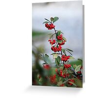 red berries in the garden Greeting Card