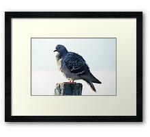 bird on lake Framed Print