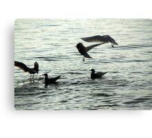 seagull on lake Metal Print