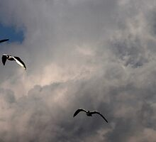 seagull fly in the sky by spetenfia
