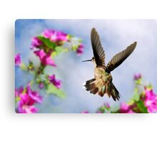Angel Wings Hummingbird Canvas Print