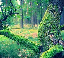 oak with moss by novopics