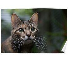 Very Fancy Cat in Focus Poster