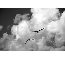 seagull fly in the sky Photographic Print