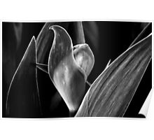 Bud With Leaf Formation Poster