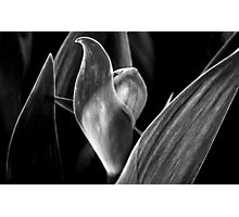Bud With Leaf Formation Photographic Print