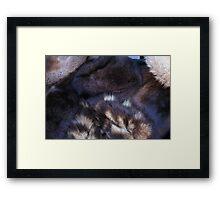animal fur Framed Print