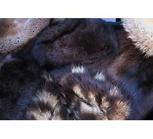 animal fur Photographic Print