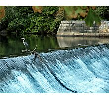 Heron - Looking towards the Future Photographic Print