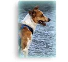 dog at lake Canvas Print