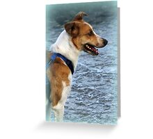 dog at lake Greeting Card