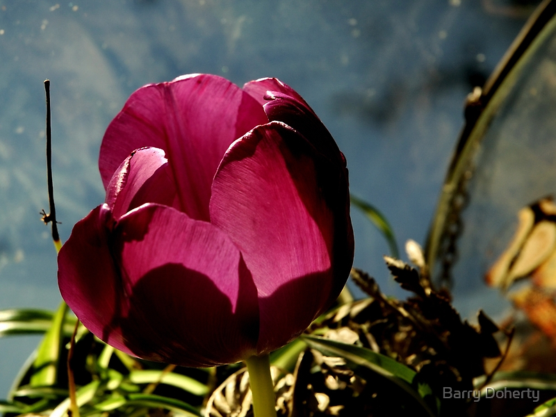 Flower in Glass by Barry Doherty