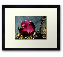 Flower in Glass Framed Print