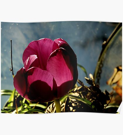 Flower in Glass Poster