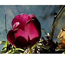 Flower in Glass Photographic Print
