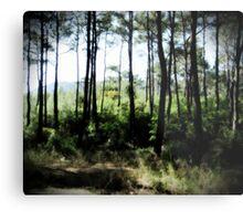 Pine Forest Edge Metal Print