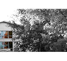 Maple Reflections in a Window Photographic Print