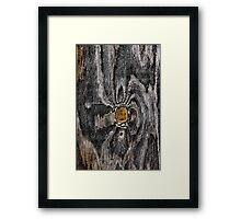 Wood knot .2 Framed Print