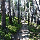 Rocky Mtn National Park - Timber Lake Trail by Bernie Garland