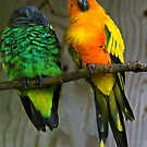 Parrots by Country  Pursuits