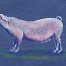 Cute pig colored pencil sketch  by Sarah Trett