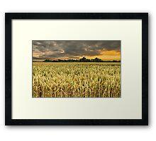 Wheat field in sunrise Framed Print
