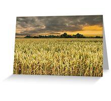 Wheat field in sunrise Greeting Card