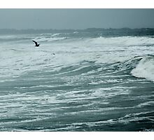 Seagull Photographic Print