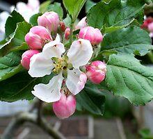 Spring blossom by digitaldavers