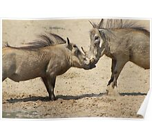Warthog - Knockout Power from Africa Poster