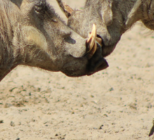 Warthog - Knockout Power from Africa Sticker