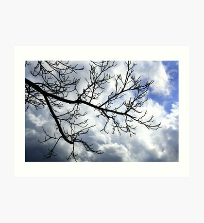 Bare Tree Branches, Cloudy Sky Art Print