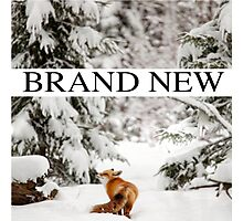 Brand new edit Photographic Print