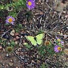 Delicate Yellow Butterfly by Katagram