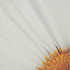 Daisy iPad cover by Candy Gemmill