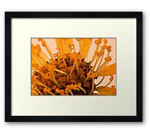 Leopard's Bane Stamen Macro Framed Print