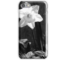 Daffodil serenity... iPhone Case/Skin