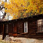 Acre 7 - Aspen Tree in Fall with Abandoned Out Building Original Photograph by GeminiMoon