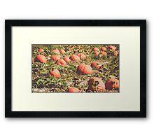 Pumpkins 12 Framed Print