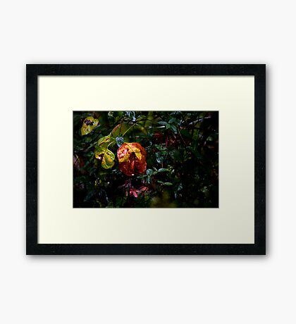 Drenched by Hurricane Matthew Framed Print