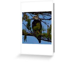 Bald Eagle on Lake Glenville Greeting Card